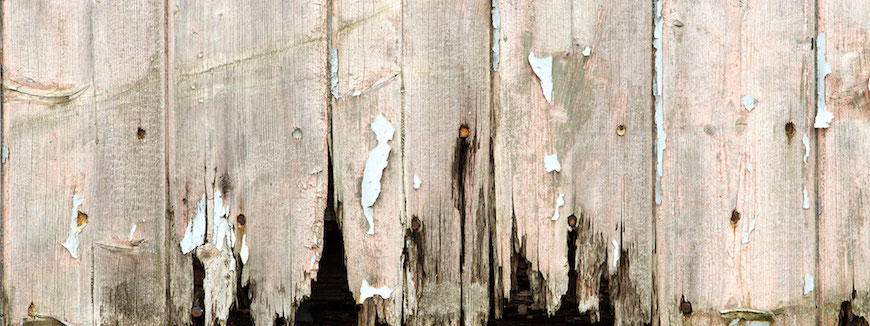 wet and dry rot