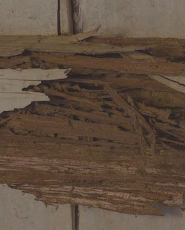 remove wet and dry rot